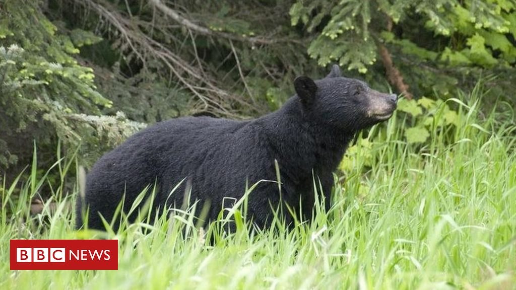 alaska-woman-attacked-by-bear-while-using-toilet