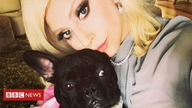 Photo of Lady Gaga's dogs found safe after armed robbery