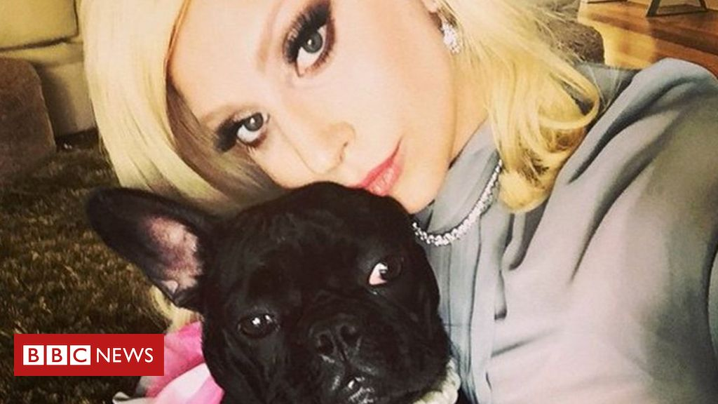 lady-gaga's-dogs-found-safe-after-armed-robbery