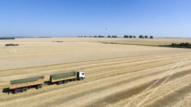 Photo of Russia doubles wheat export tax to stabilize domestic food prices