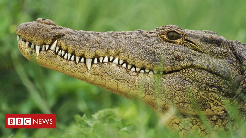 south-africa-crocodiles:-hunt-on-after-mass-escape-in-western-cape