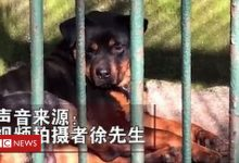 Photo of China zoo 'tries to pass dog off as wolf'