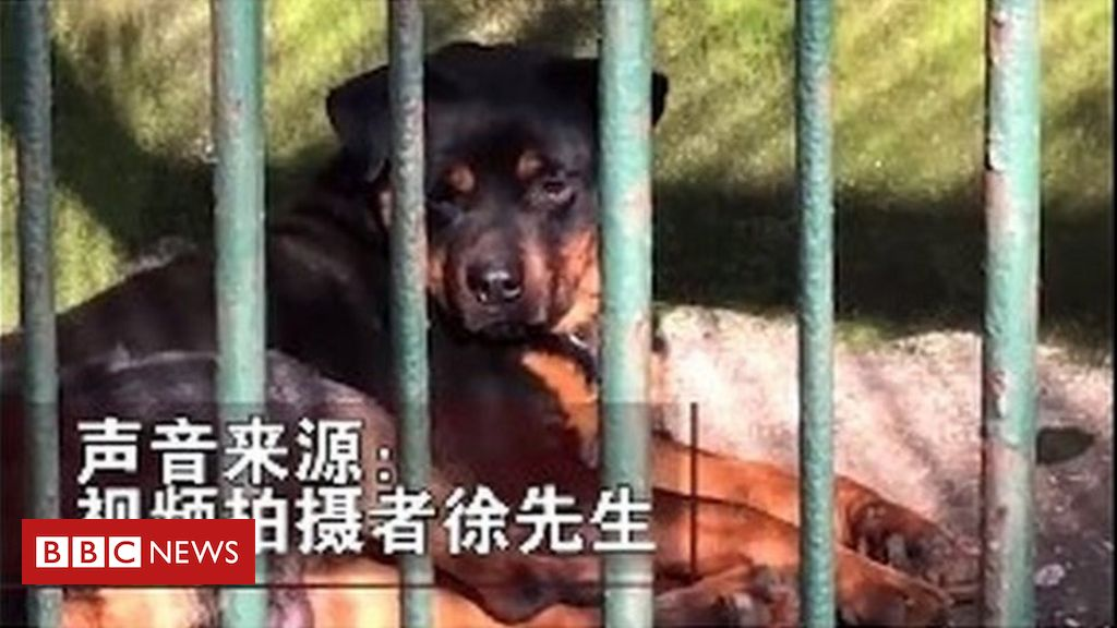 china-zoo-'tries-to-pass-dog-off-as-wolf'