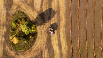Photo of Russian agricultural exports surge as trade with China grows