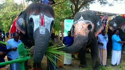 the-clinic-where-india's-temple-elephants-come-to-recuperate