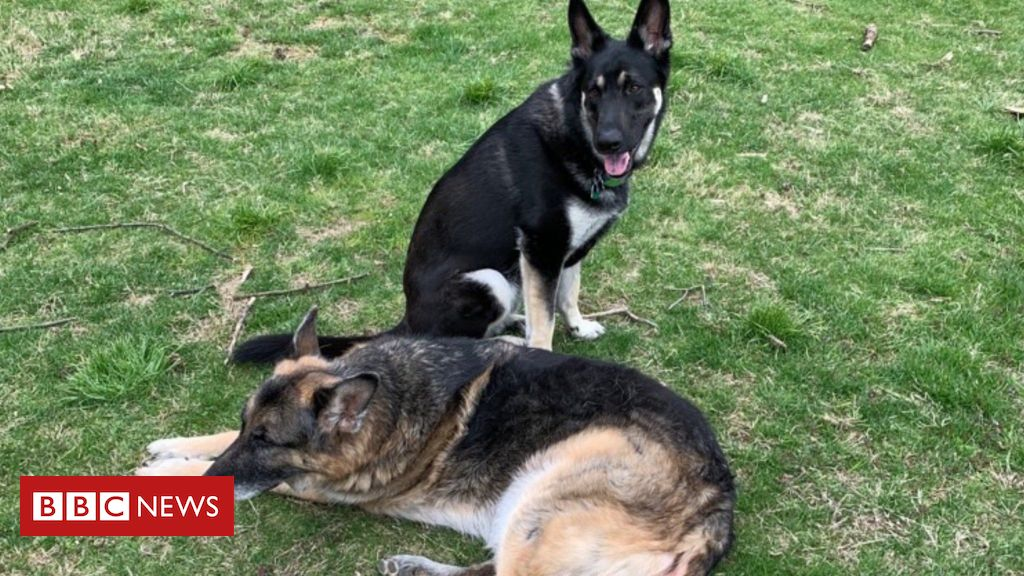 major-and-champ:-joe-biden's-dogs-moved-out-of-white-house