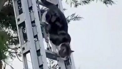Photo of ICYMI: Faceplanting albatross and cat rescues itself