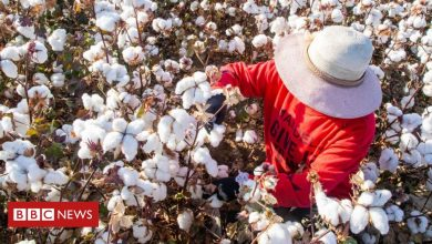 Photo of Xinjiang cotton: How do I know if it's in my jeans?