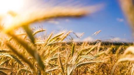 russia-boosts-agricultural-exports-amid-covid-pandemic