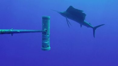 Photo of World's largest ocean monitoring system BRUVS launched