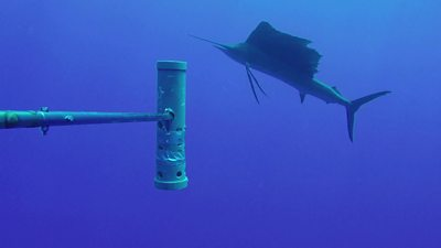 world's-largest-ocean-monitoring-system-bruvs-launched