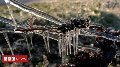 Photo of Save our wine! Big freeze spells disaster for French vineyards