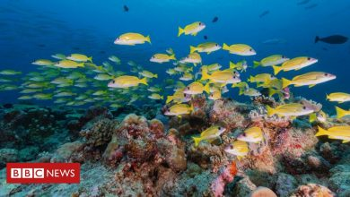 Photo of Ocean noise: Study to measure the oceans' 'year of quiet'