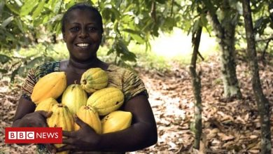 Photo of Ghana's farmers eye sweet success from chocolate