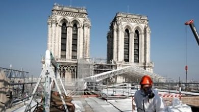 Photo of Rebuilding Notre-Dame cathedral… with 1,000 oak trees