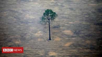 Photo of Brazil 'needs $10bn to reach zero emissions' says minister
