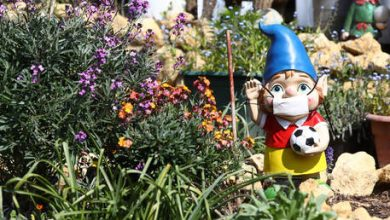Photo of The great British garden-gnome famine: Elf is on the way after Suez Canal snarl-up & Covid deprive UK of beloved ornaments