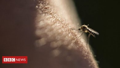 Photo of Malaria vaccine hailed as potential breakthrough