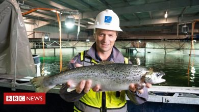 Photo of The salmon you buy in the future may be farmed on land