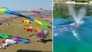 Photo of ICYMI: Chinese kite festival and a whale in Italy
