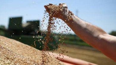 Photo of Russian wheat exports surge nearly 11% despite export curbs