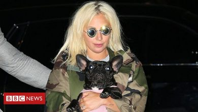 Photo of Lady Gaga: Five arrested in dognapping case