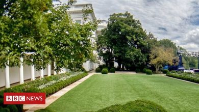 Photo of Petition urges US First Lady Jill Biden to restore White House garden to 'former glory'