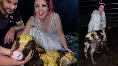 Photo of Australian bride gets muddy for arrival of calf at wedding