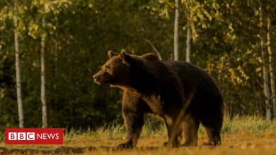 Photo of Prince blamed for shooting one of Europe's biggest bears