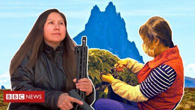 Photo of Chinese dreams on Native American land: A tale of cannabis boom and bust