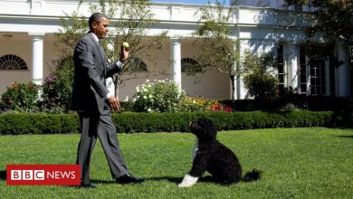 Photo of Obamas' dog Bo dies: 'We said goodbye to our best friend'