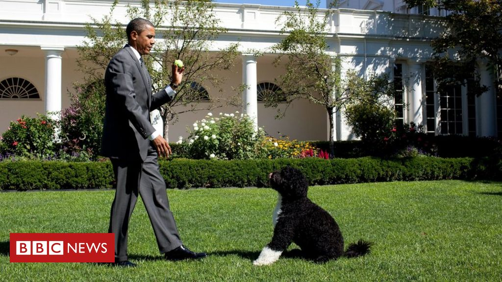 obamas'-dog-bo-dies:-'we-said-goodbye-to-our-best-friend'