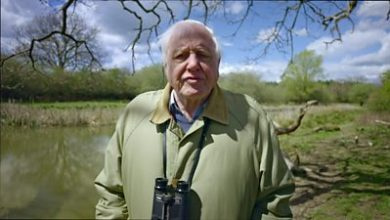 Photo of Sir David Attenborough: Problems that await greater than the epidemic
