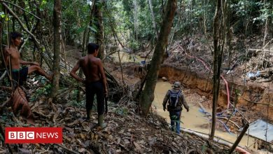Photo of Brazil Amazon: Illegal miners fire on indigenous group