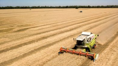 Photo of Russian farmers about to reap bumper grain harvest – USDA