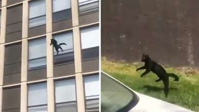 Photo of Cat jumps five storeys to safety from burning building