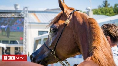 Photo of Champion horse mystery in the Gulf angers Poles
