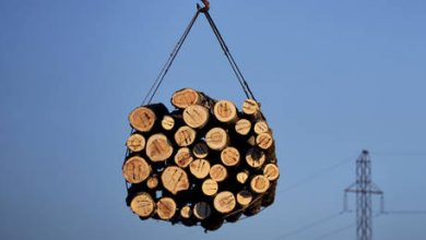 Photo of Russia to introduce export duties on green lumber sales to rein in price growth