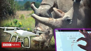 Photo of Drones and live-streams: How tech is changing conservation