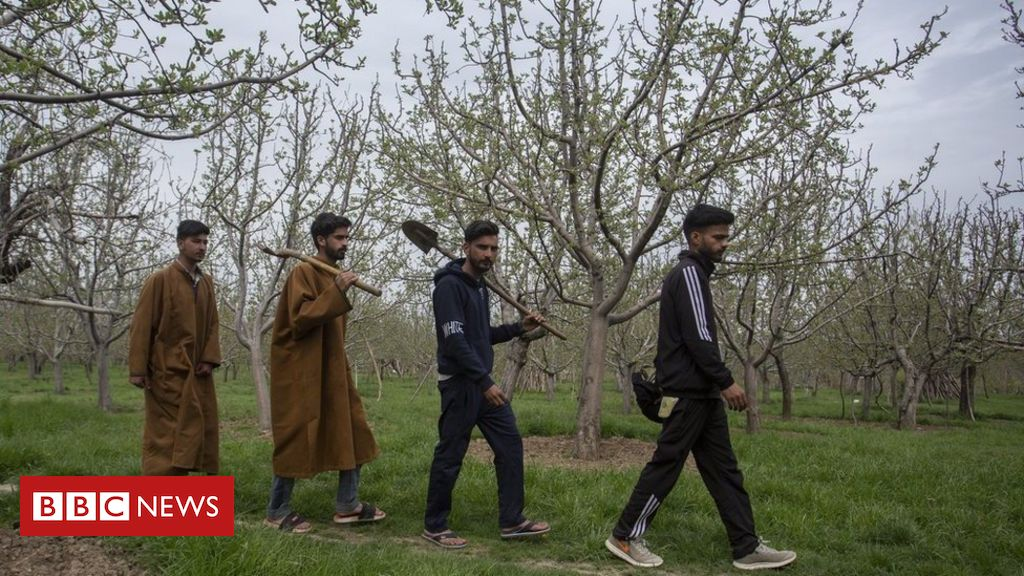 kashmir:-a-father-digging-up-the-ground-to-find-his-missing-son