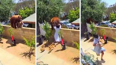 Photo of California teen girl fights off a bear attacking her dogs