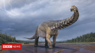 Photo of Scientists say new dinosaur species is largest found in Australia