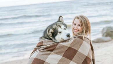 Photo of 7 Amazing Dog-Friendly Travel Destinations In The U.S. For 2021