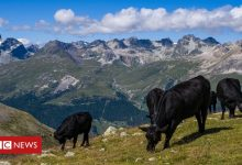 Photo of Swiss to vote in pesticide ban referendum
