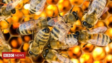 Photo of Tech firms use remote monitoring to help honey bees