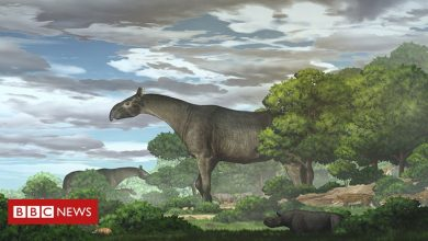 Photo of Giant rhino fossils in China show new species was 'taller than giraffe'