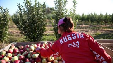 Photo of Russia's agricultural exports could top $30 BILLION this year