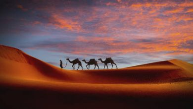 Photo of China ramps up investment into countries participating in the New Silk Road initiative