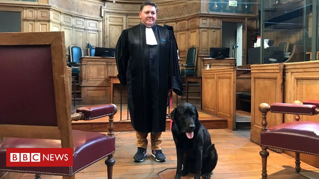 french-court-dog-helps-soothe-anxious-victims-of-crime