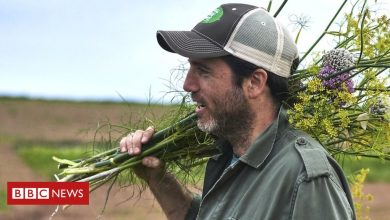 Photo of How farmers and scientists strive for more flavour
